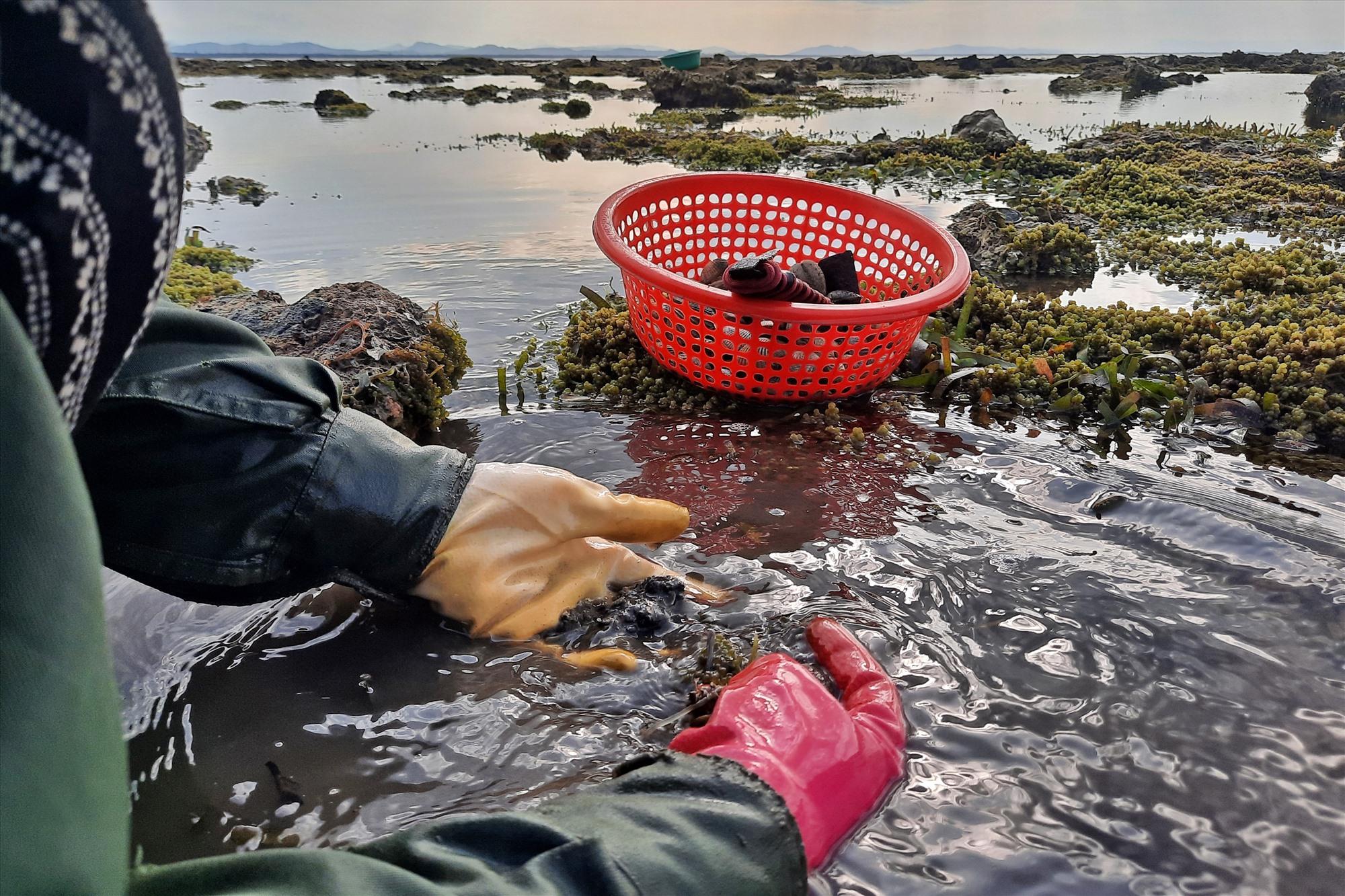 Bà Trần Thị Bích Liên (thôn Thuận An) cho biết, nghêu thường nằm lẫn trong bùn nên phải dùng đồ cào xới, rồi lấy tay mò mới bắt được nghêu.