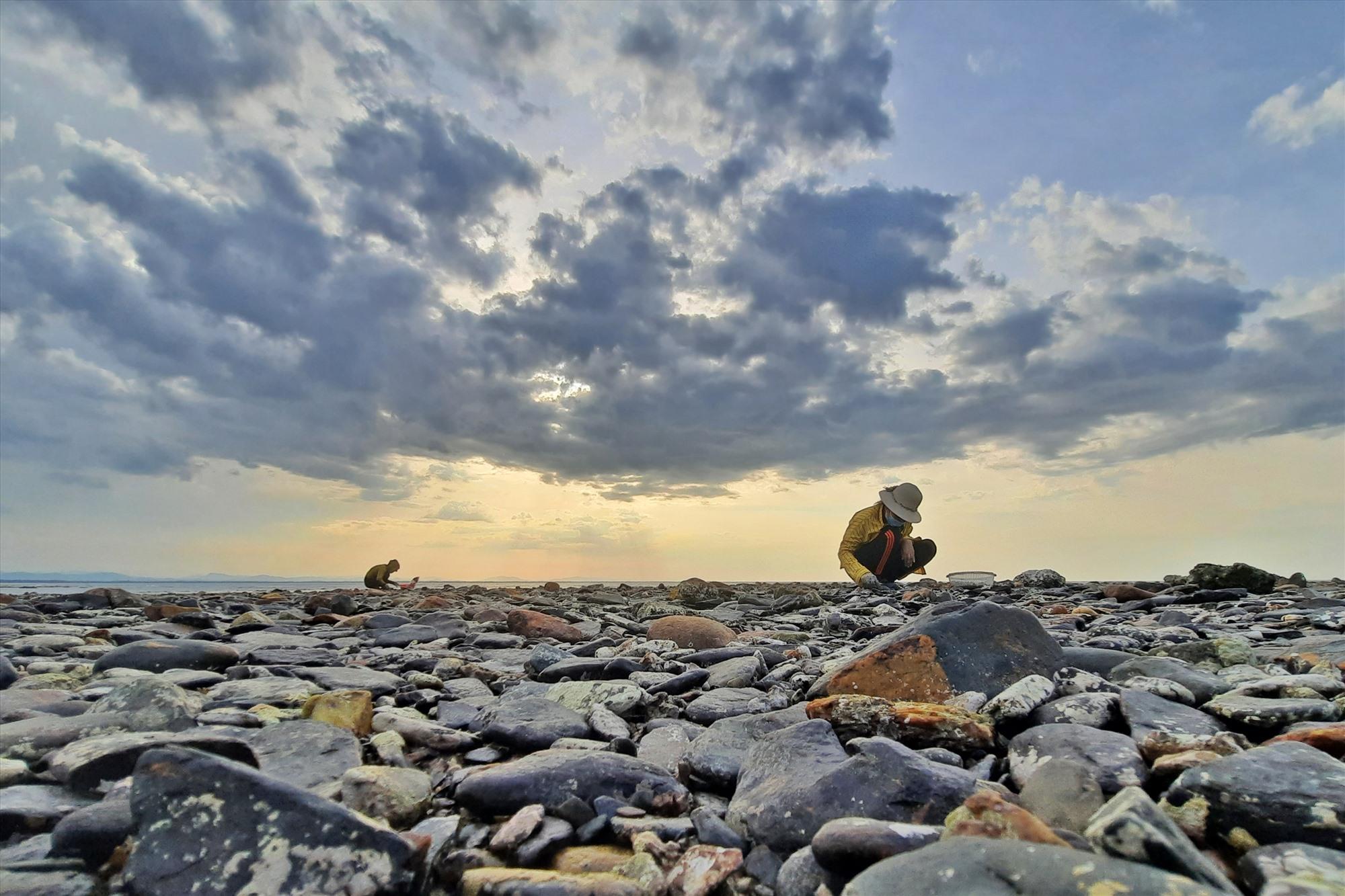 Không chỉ dưới các rạn đá san hô mà người dân Tam Hải còn có thể cào nghêu trên các bãi đá sỏi khi nước rút.