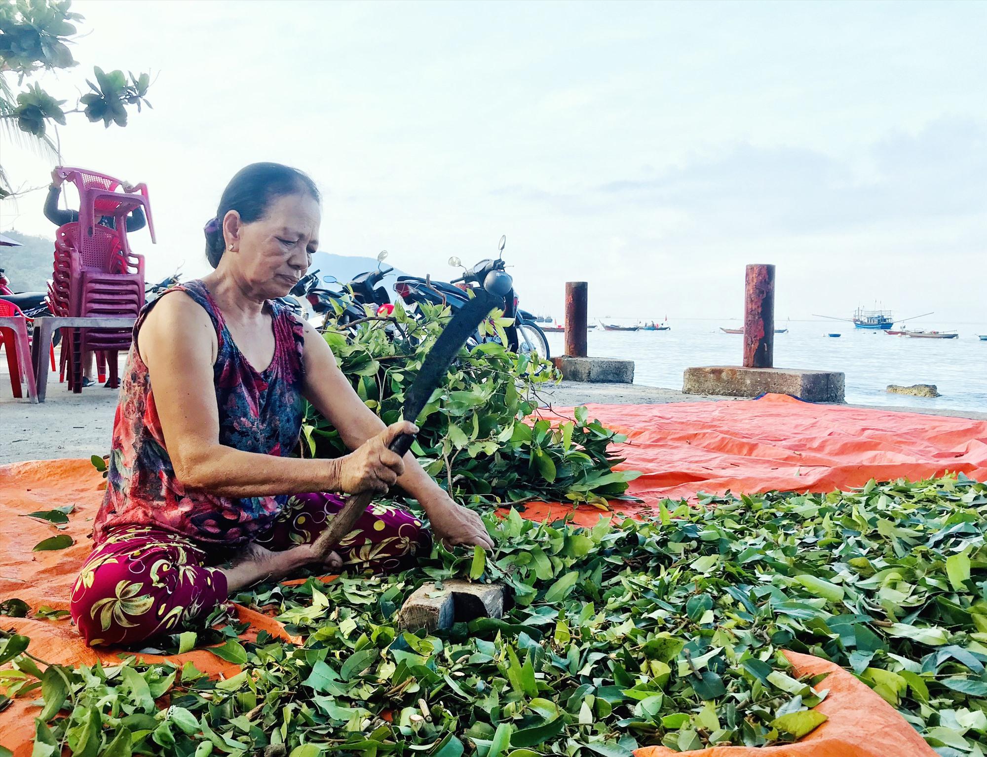 Việc khai thác lá rừng, dược liệu giúp cải thiện sinh kế người dân trên đảo. Ảnh: Q.T