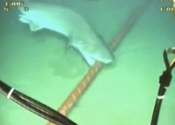 """""""Cá mập cắn cáp"""" từng là nguyên nhân gây được cộng đồng mạng Việt Nam đồn thổi. Ảnh: slate.com"""