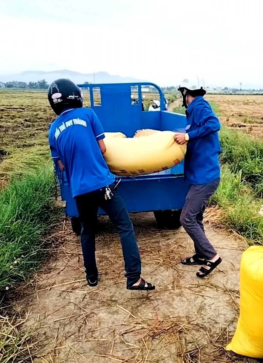 Sau khi thu hoạch, đoàn viên thanh niên xã Duy Thành giúp dân đổ lúa vào bao, chất lên xe.     Ảnh: T.L