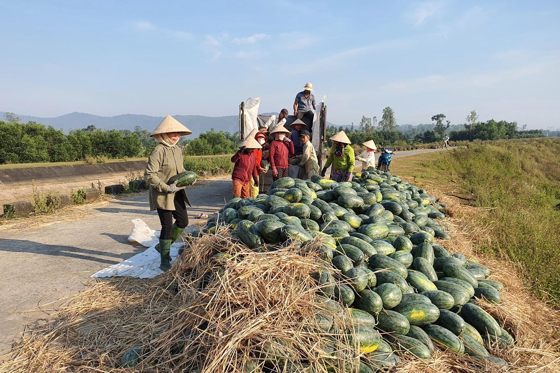 Thời gian qua, do nhiều địa phương thực hiện giãn cách xã hội, việc tiêu thụ nông sản của nông dân trên địa bàn tỉnh gặp nhiều khó khăn. Ảnh: N.P