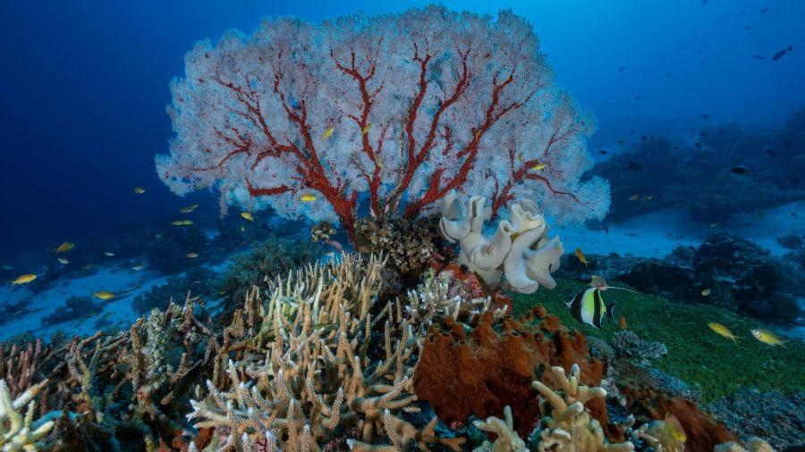 Biến đổi khí hậu, đô thị hoa đe dọa đến sự sống của nhiều khu vực san hô trên thế giới. Ảnh: Gettyimage