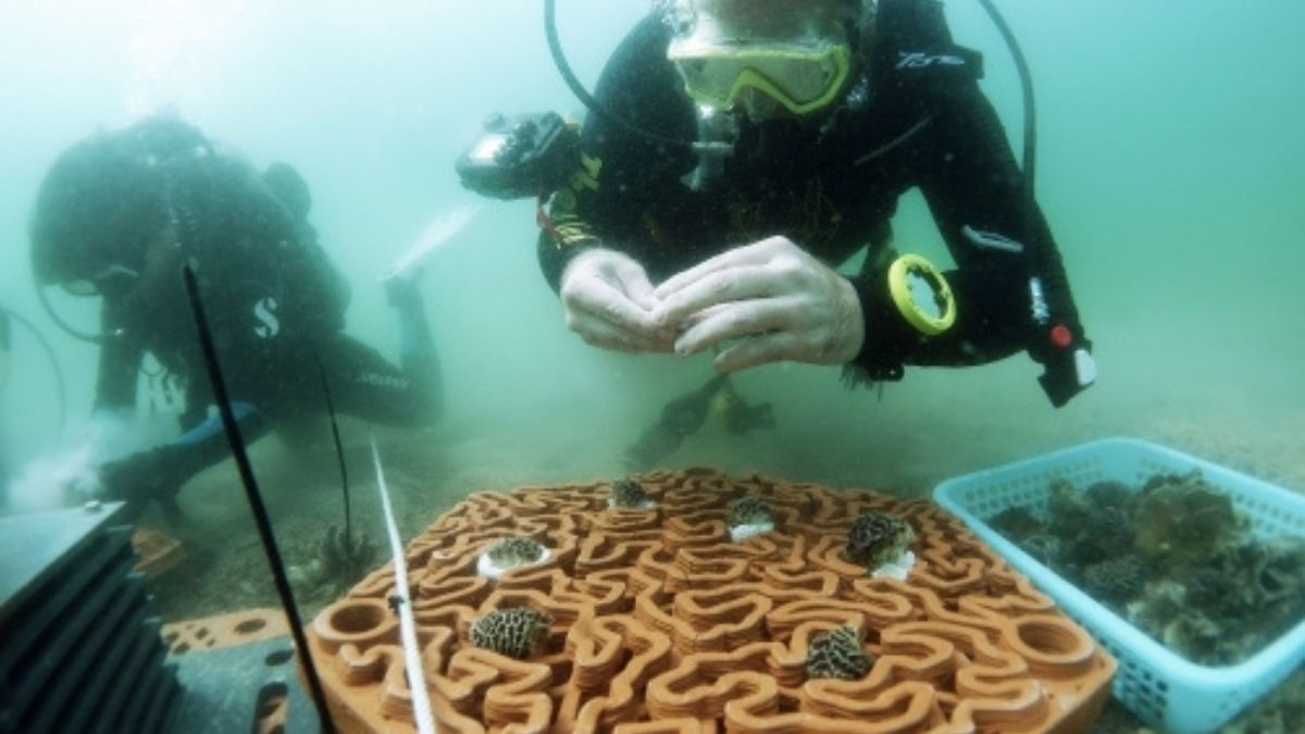 Các nhà nghiên cứu đại học Hồng Kông lắp đặt thiết kế theo công nghệ 3D để tái tạo các rạn san hô. Ảnh: Gettyimage