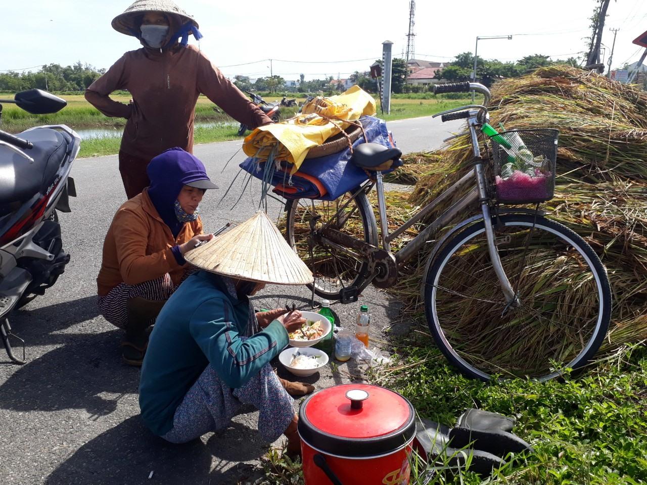 Nhiều phụ nữ tranh thủ ăn vội ít thức ăn để lấy sức tiếp tục gặt lúa.