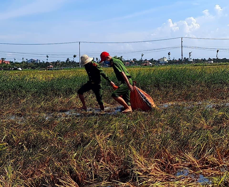 Lực lượng công an xã cũng tích cực gom lúa giúp người dân.