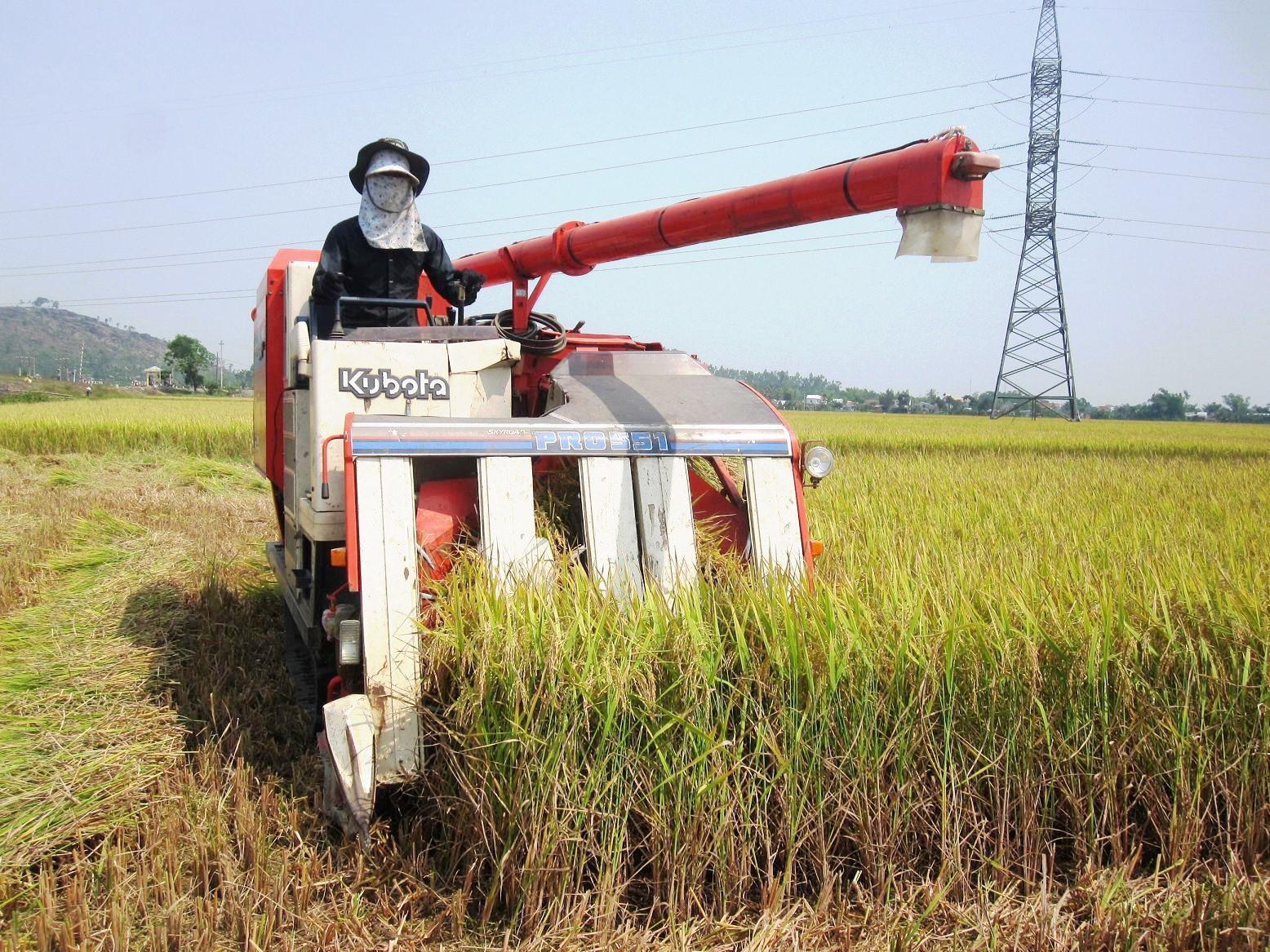 """Trong định hướng đột phá về nguồn nhân lực, Quảng Nam cần quan tâm xây dựng đội ngũ """"nông dân chất lượng cao"""". Ảnh: V.S"""