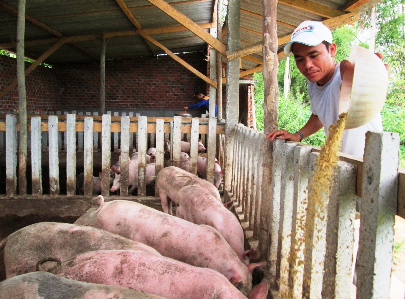 Hiện nay, phần lớn người dân gặp khó khăn về nguồn vốn đầu tư phát triển mô hình kinh tế trang trại. Ảnh: N.S
