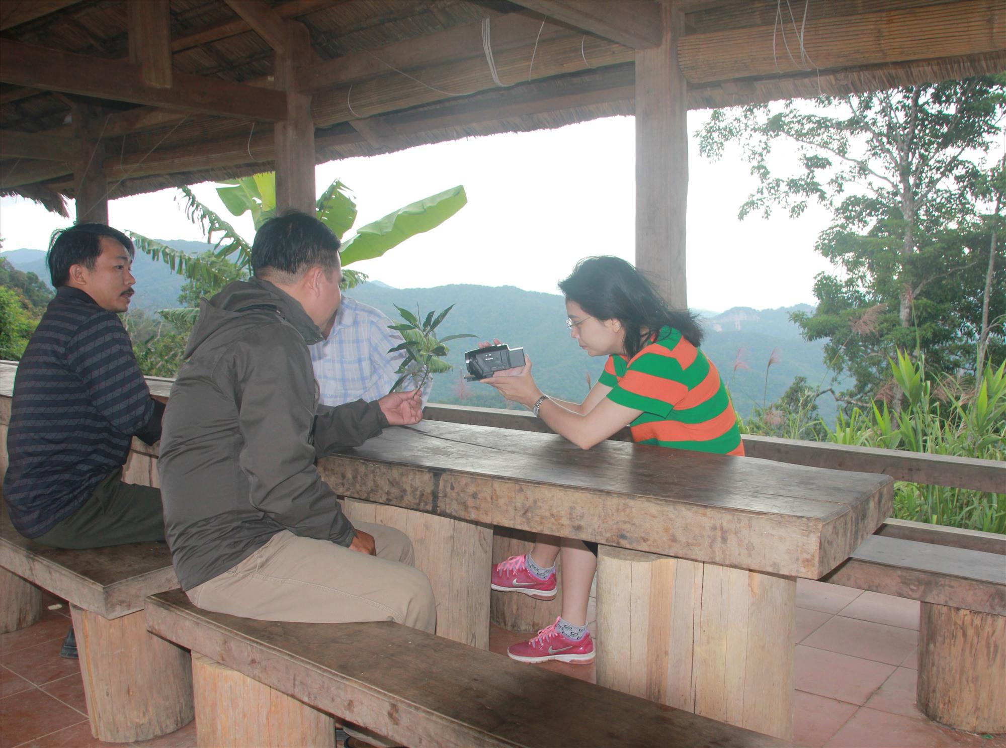 Do có nhiều tiềm năng, miền núi Quảng Nam đang phát triển các mô hình du lịch cộng đồng đặc trưng của địa phương. TRONG ẢNH: Điểm dừng chân Đỉnh Quế (Tây Giang). Ảnh: H.QUANG