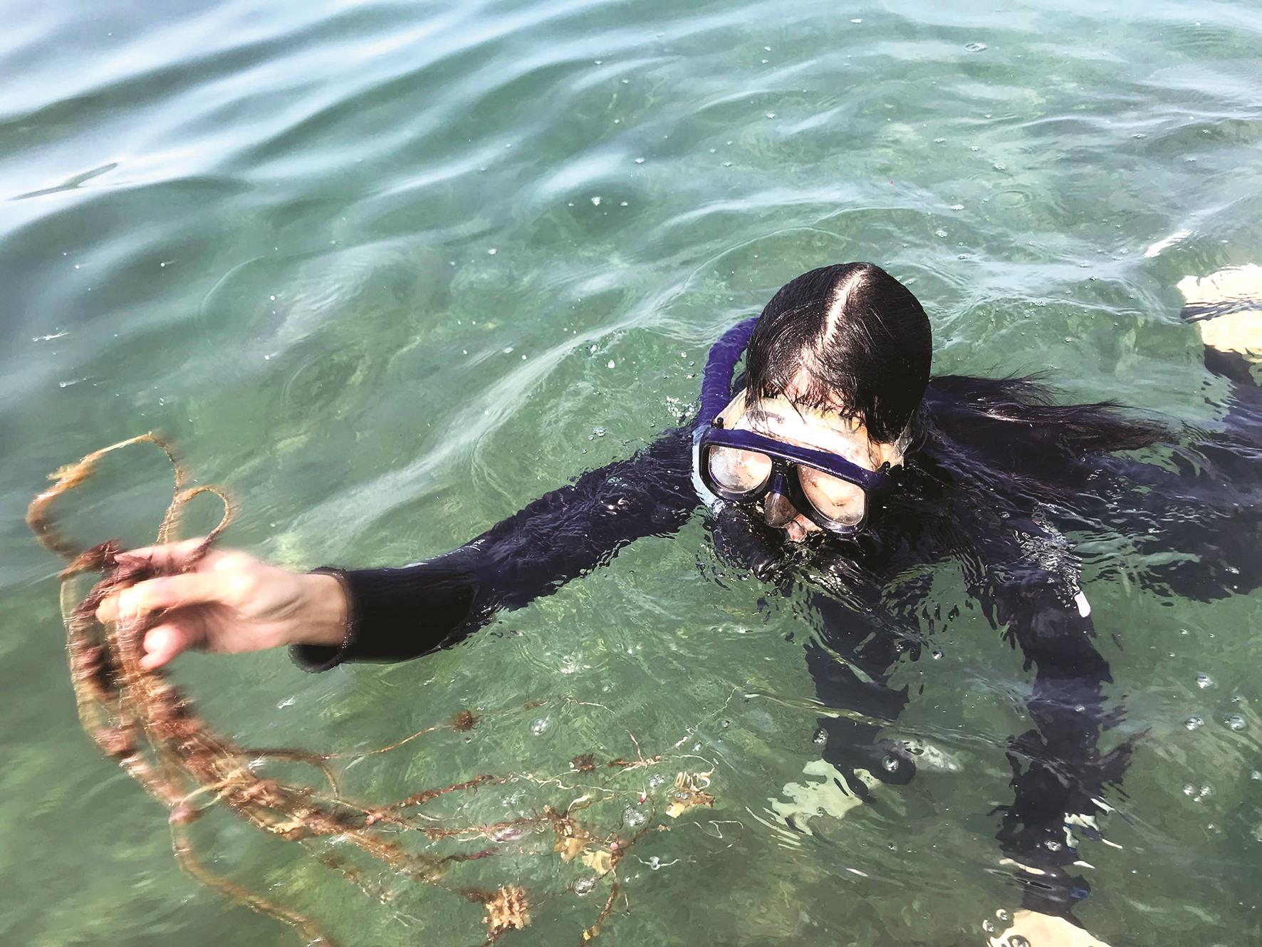 Tiêu diệt sao biển gai và làm sạch rác thải giúp san hô phát triển.