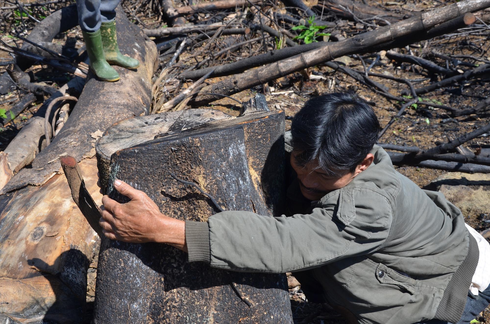 Một gốc cây cổ thụ ôm vòng tay không xuể cháy xém tại hiện trường. Ảnh: T.H