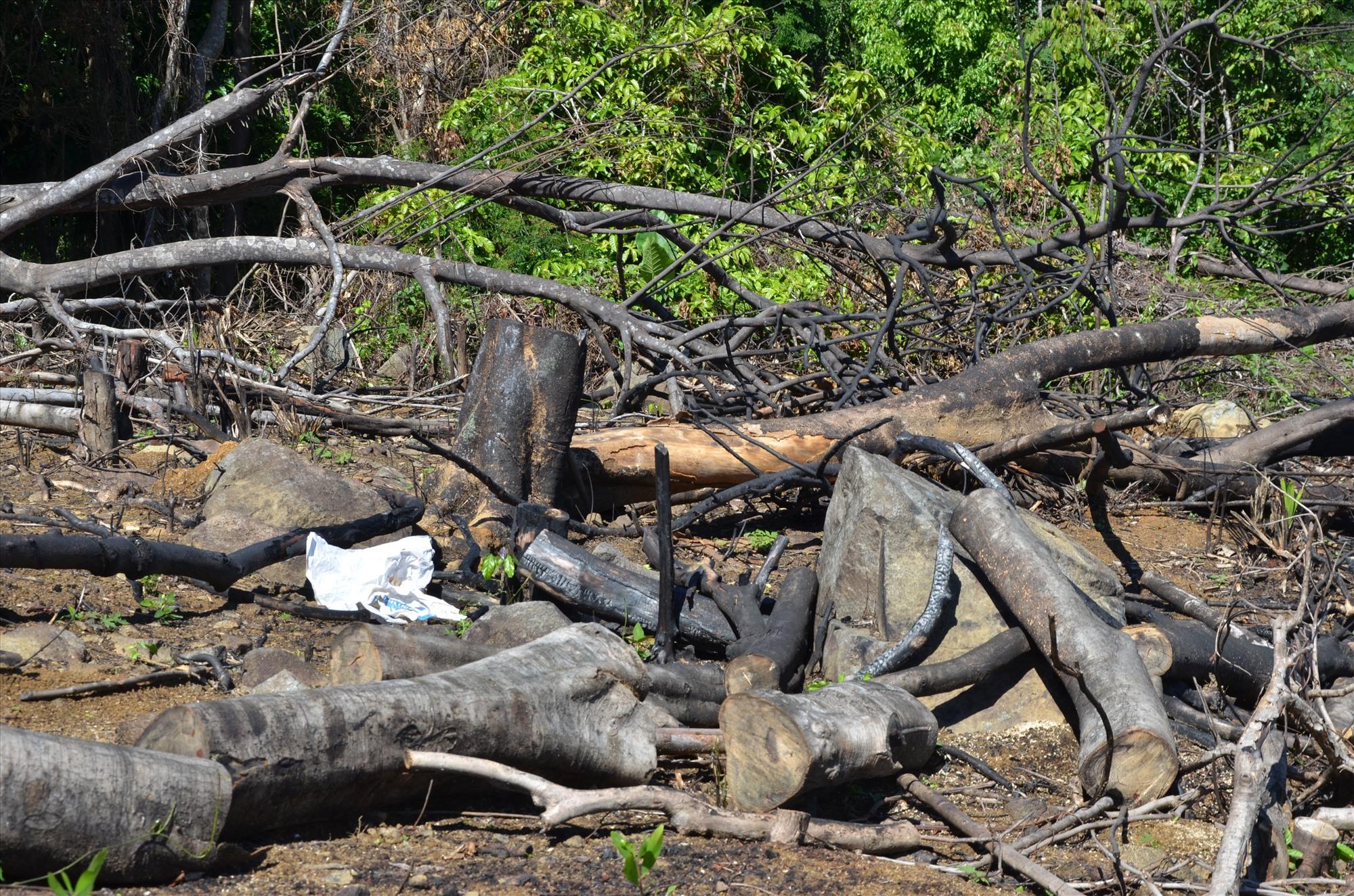 Đốt rừng để phi tang hiện trường. Ảnh: HP
