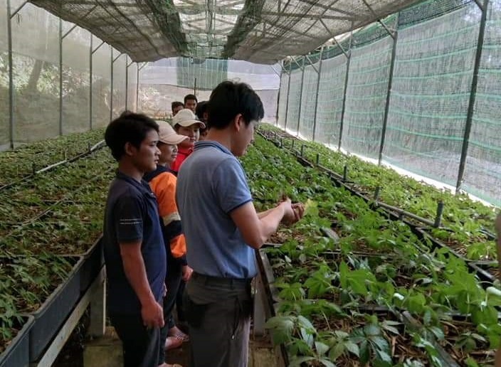 A garden of Ngoc Linh ginseng seedlings in Tra Linh commune