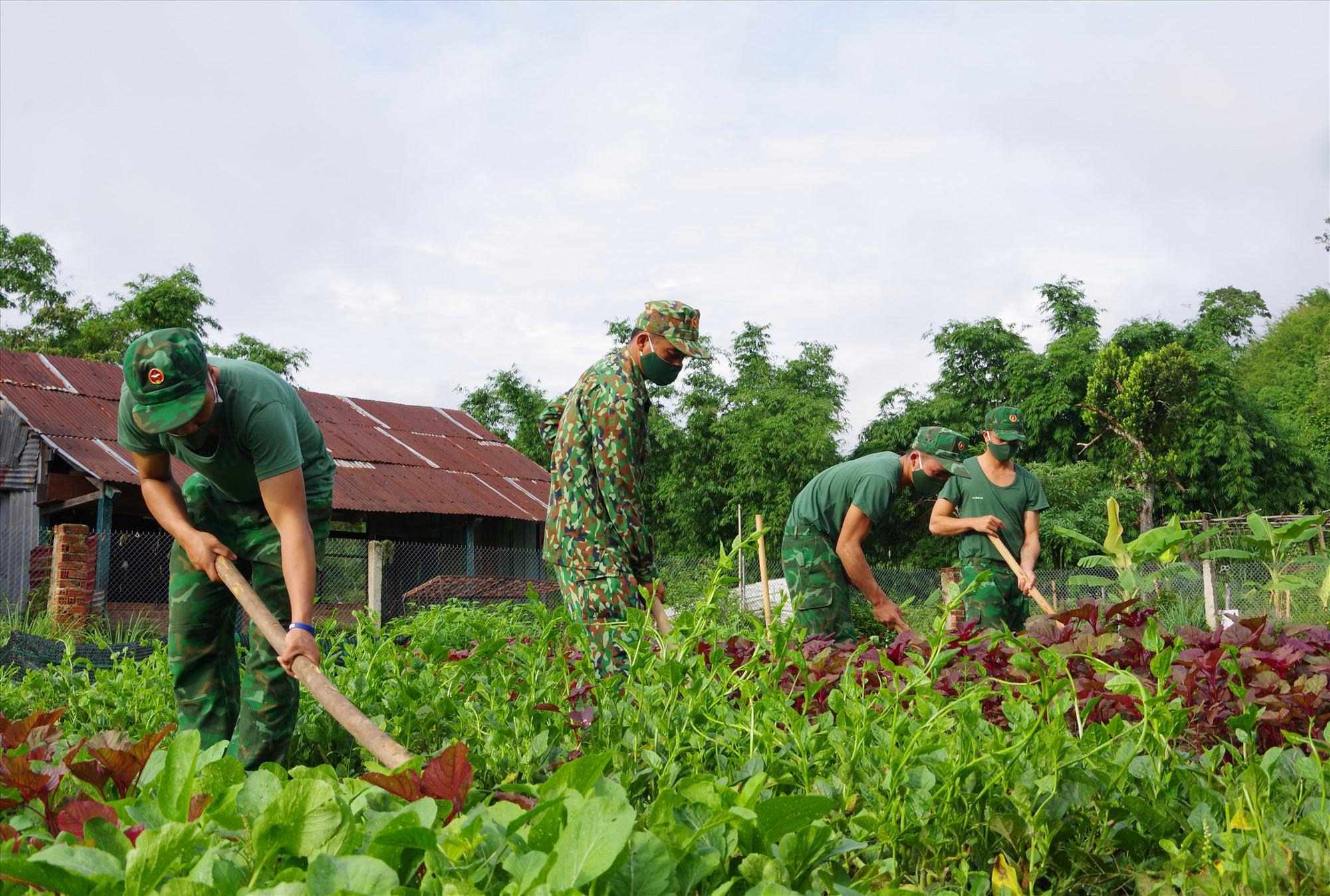 Cán bộ, chiến sĩ Đồn Biên phòng cửa khẩu Nam Giang tăng gia sản xuất. Ảnh: HỒNG ANH