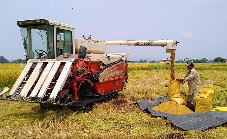 Nông dân Điện Bàn thu hoạch lúa Hè thu.