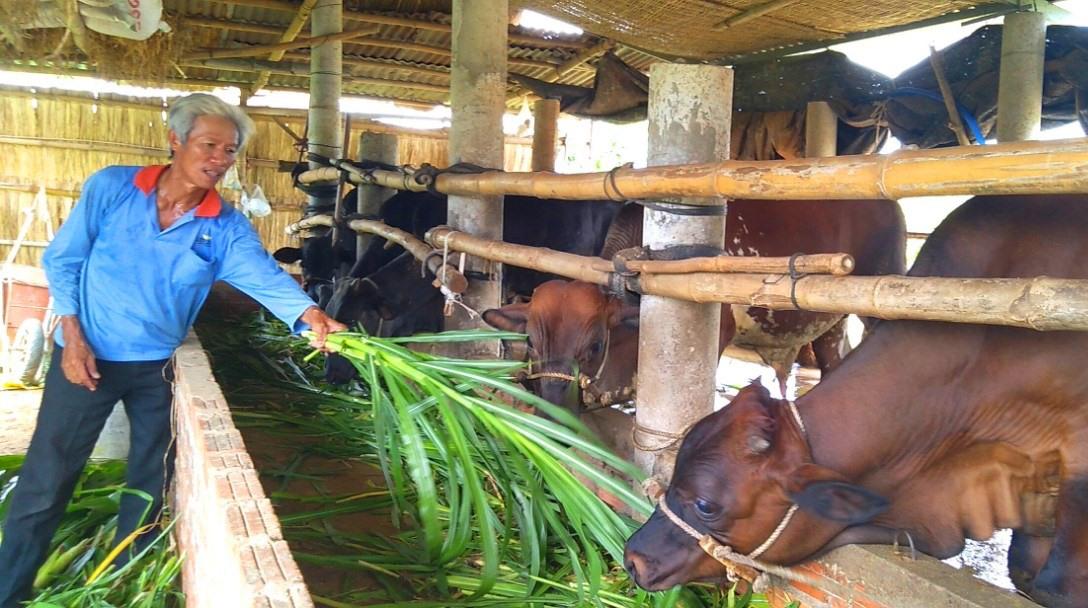 Từ nguồn vốn vay của Phòng giao dịch Ngân hàng CSXH thị xã Điện Bàn đã giúp nhiều hộ dân thoát nghèo bền vững. Ảnh: P.LỘC