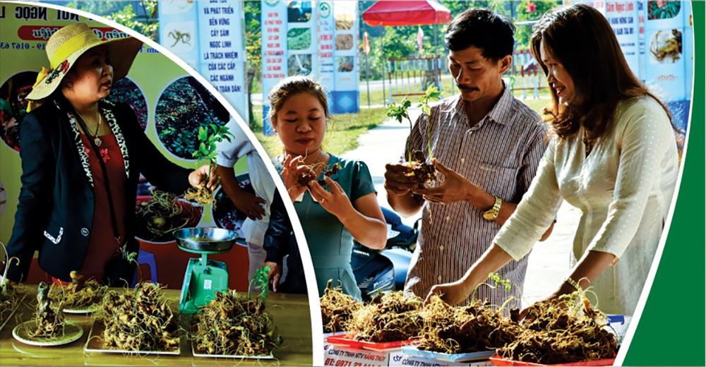 Các sản phẩm sâm Ngọc Linh, gốm lá sâm, cũ sâm, rượu sâm đang được bày bán tại phiên chợ sâm Ngọc Linh vào những ngày đầu hàng tháng tại huyện Nam Trà My.
