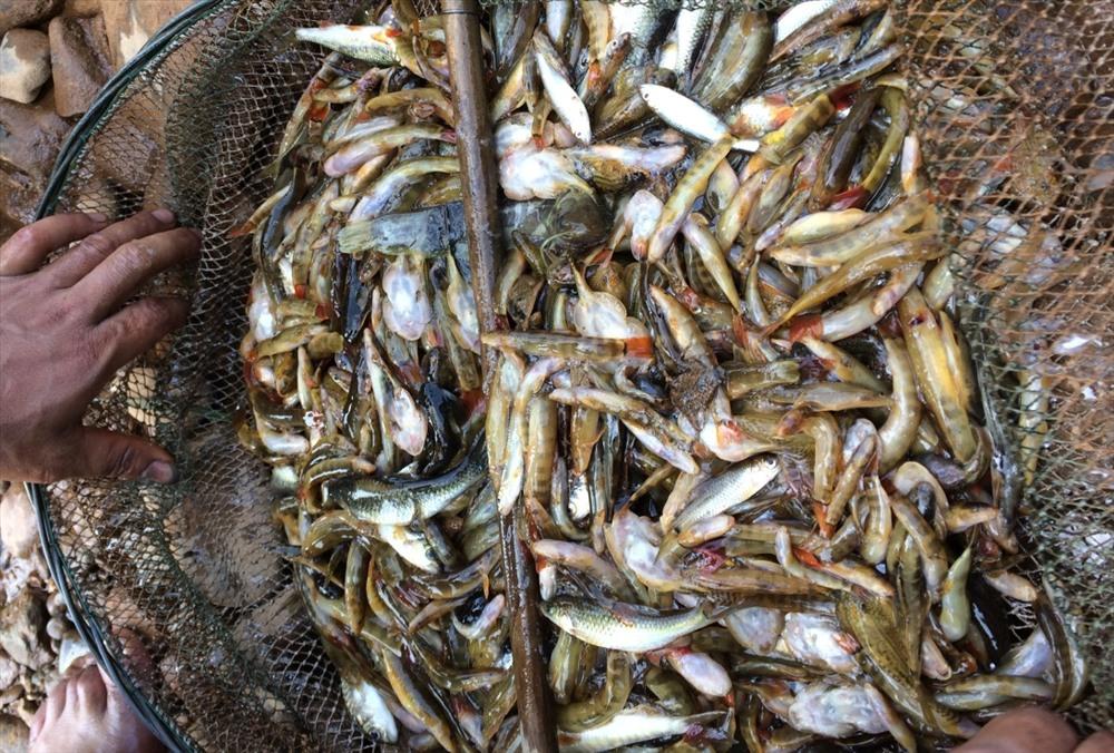 Thành quả sau một buổi ngăn sông bắt cá. Cá ở đầu nguồn sông A Vương chủ yếu cá loại nhỏ được người dân nơi đây dùng vợt để bắt, ít khi dùng bằng vỏ cây Tr'bâây.
