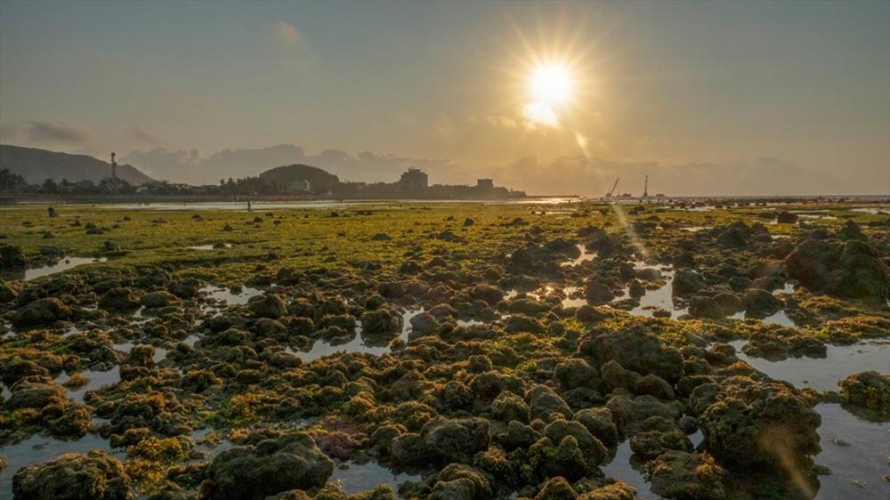 Trong ánh bình minh, những bãi đá sẽ lộ lên, khoe mình trong nắng mới, vàng ươm. Đây là khu vực gành biển nằm trong Khu bảo tồn biển Lý Sơn đang trong quá trình hoàn thiện. Ảnh: Xuân Thọ