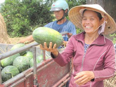 Nông dân phấn khởi thu hoạch dưa theo tiêu chuẩn VietGAP. Ảnh: N.D