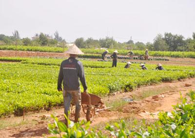 Nguồn cung ứng giống cây trồng lâm nghiệp đủ đáp ứng cho mùa trồng rừng 2013. Ảnh: T.H