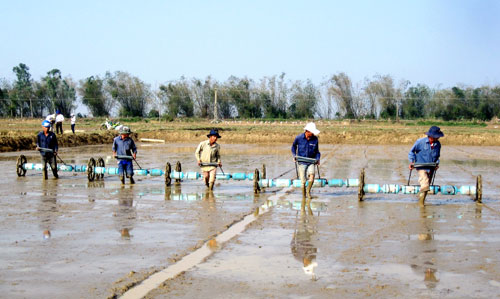 Ứng dụng chương trình ICM trong canh tác lúa sẽ mang lại rất nhiều cái lợi cho nông dân.