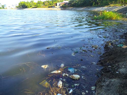 Cá chết hàng loạt nổi trên mặt hồ. (Ảnh chụp ngày 29.5.2014)Ảnh: T.A