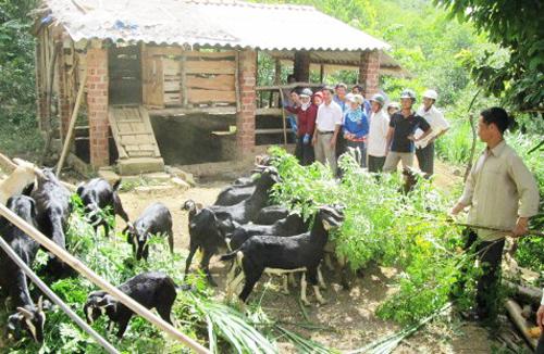 Nông dân trong xã đến tham quan học hỏi mô hình chăn nuôi dê và bò lai của gia đình anh Dương Văn Quân.  Ảnh: N.H