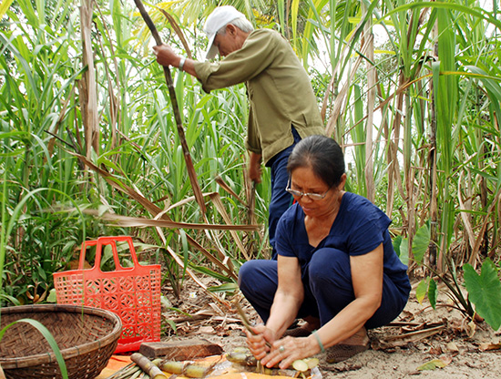 """Bà Phạm Thị Mỹ - Út Nỉ dành hết đời mình để """"kiếm tiền"""" chăm lo cho trẻ em nghèo xã Tam Hải."""