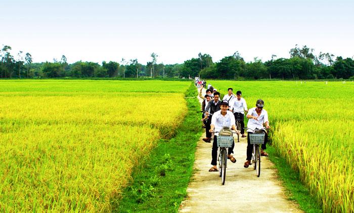 Bờ lúa reo. Ảnh: Nguyễn Tuấn.