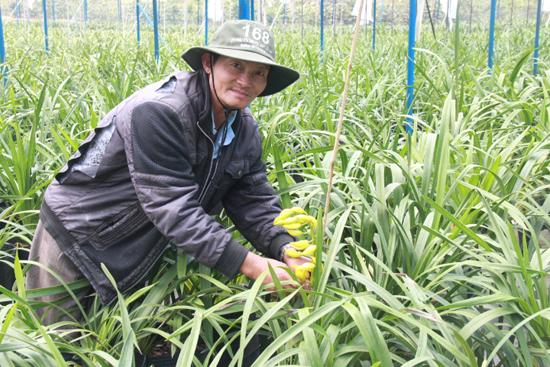 Việc đầu tư trồng hoa địa lan trong nhà kính giúp gia đình ông Lê Thanh Hùng làm giàu trên vùng đất mới. Ảnh: PHONG VÂN