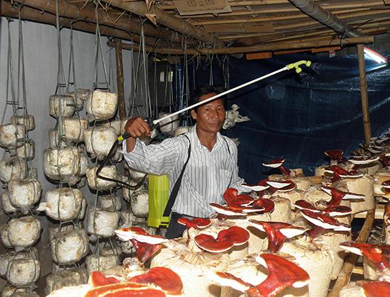Nhờ được hướng dẫn kỹ thuật, nhiều hộ dân có nguồn thu nhập khá từ mô hình trồng nấm.