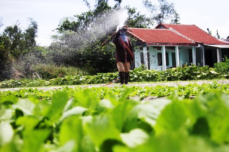 Người dân làng rau Mỹ Hưng, xã Bình Triều, huyện Thăng Bình không mặn mà với trồng rau VietGAP.