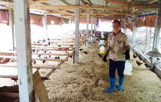 Được hỗ trợ mô hình đệm lót sinh thái trong chăn nuôi gà, chị Hoàng Thị Hoa đã không còn lo ô nhiễm, dịch bệnh. Ảnh: T.QUÂN