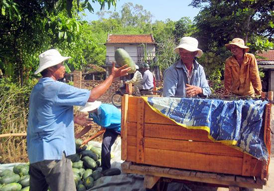 Dưa hấu tại xã Tam Phước được bán với giá 5.500 - 7.000 đồng/kg vào sáng 13.7. Ảnh: VĂN HÀO