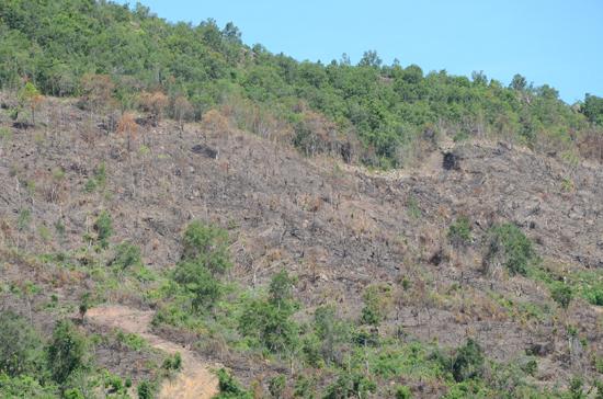 Nhiều diện tích đất quy hoạch cho trồng cao su tại xã Ba (Đông Giang) bỏ hoang nhiều năm nay. Ảnh: T.H