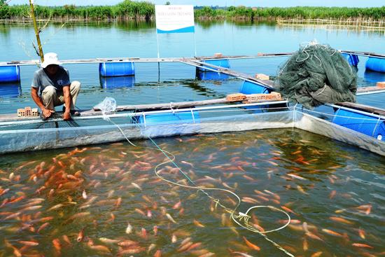 Dự án nuôi trồng thủy hải sản là một trong những lĩnh vực được ưu tiên hỗ trợ đầu tư. Ảnh: HOÀI NHI