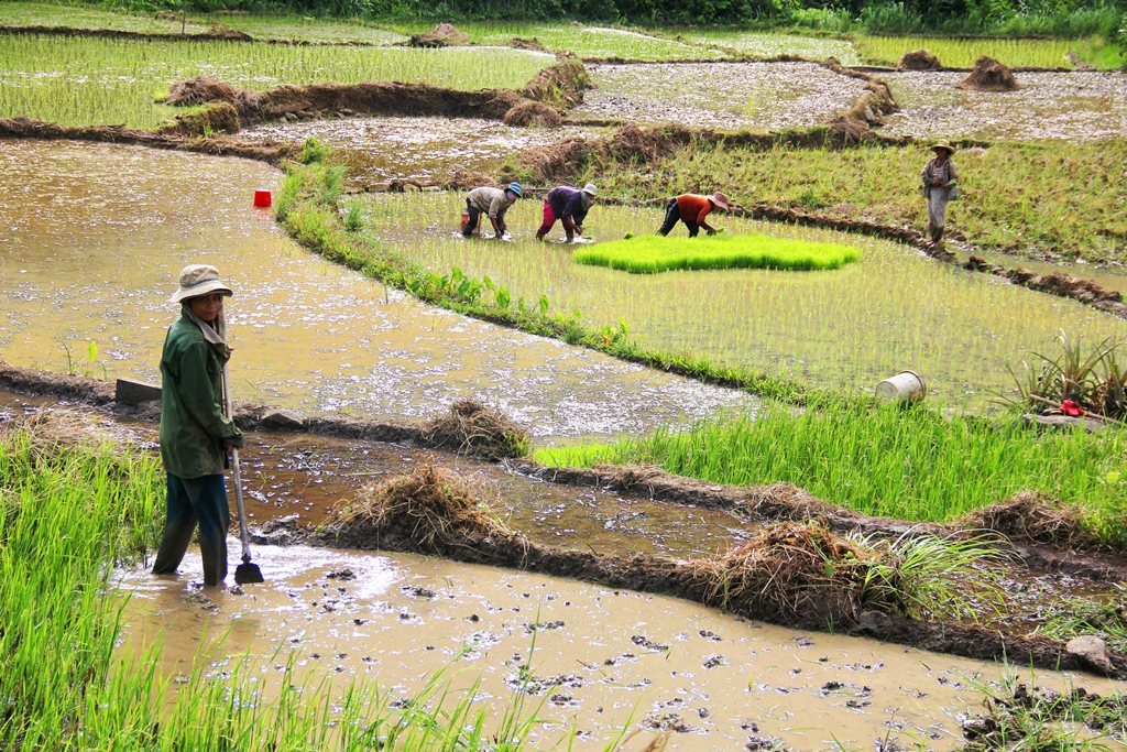 Từ nguồn vốn Chương trình 135, huyện Đông Giang đã thực hiện nhiều hỗ trợ cho phát triển sản xuất cho đồng bào vùng cao . Ảnh: ALĂNG NGƯỚC