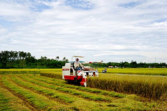 Ngành nông nghiệp tỉnh đã có bước phát triển vượt bậc, góp phần quan trọng vào việc ổn định chính trị - xã hội nông thôn và nâng cao đời sống nông dân. Ảnh: PHƯƠNG THẢO