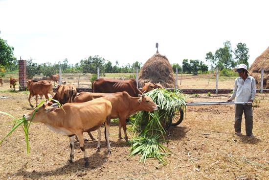Chăn nuôi hàng hóa bền vững sẽ hạn chế phát triển tự phát, manh mún của ngành chăn nuôi. Ảnh:  VĂN SỰ
