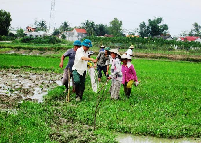 Tính đến thời điểm này, toàn huyện đã dồn điền đổi thửa 2.343ha đất nông nghiệp.