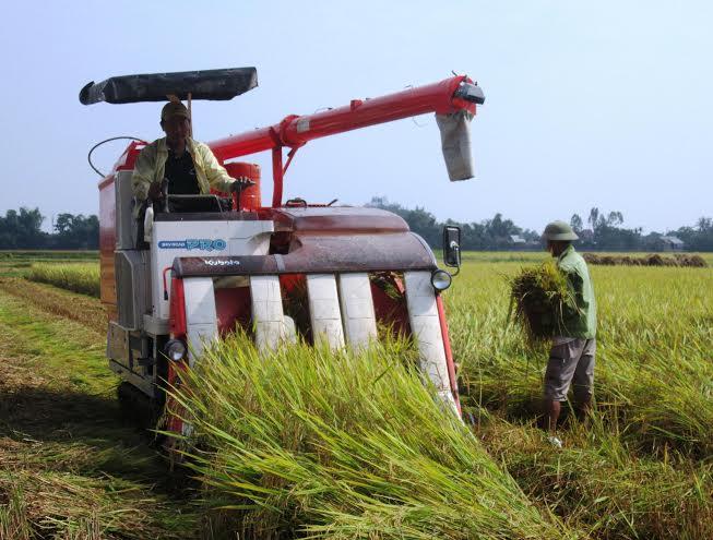 Hiện nay, tỷ lệ cơ giới hóa khâu thu hoạch lúa trên toàn huyện đạt 80%. Ảnh: N.P