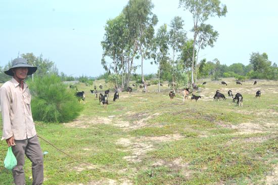 Ông Hà Phước Khánh đang chăn đàn dê của gia đình. Ảnh: V.Q