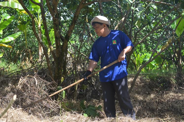 Anh Nguyễn Văn Khôi chăm sóc cho vườn bưởi của gia đình.