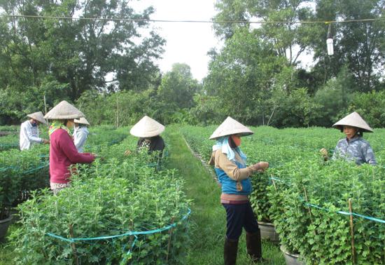 Không khí nhộn nhịp ở vườn hoa của gia đình chị Nguyễn Thị Thanh (xã Tam Thăng, TP.Tam Kỳ). Ảnh: DUNG THÙY