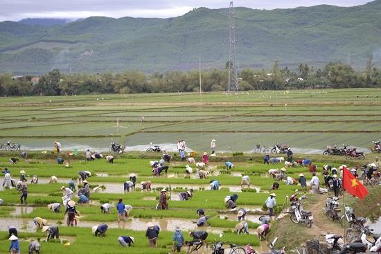 Nông dân mang cờ Tổ quốc ra cắm trên cánh đồng để tạo khí thế trong lao động.