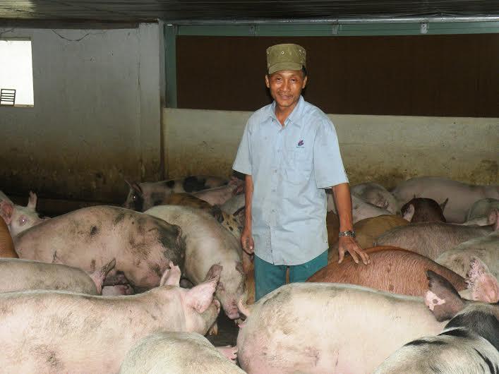 Mô hình kinh tế trang trại là hướng chủ lực trong phát triển nông -  lâm - ngư nghiệp. Ảnh: V.S