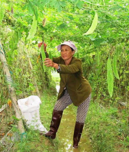 Nhiều mặt hàng nông sản thường lâm vào cảnh được mùa mất giá. Ảnh: THÀNH SỰ