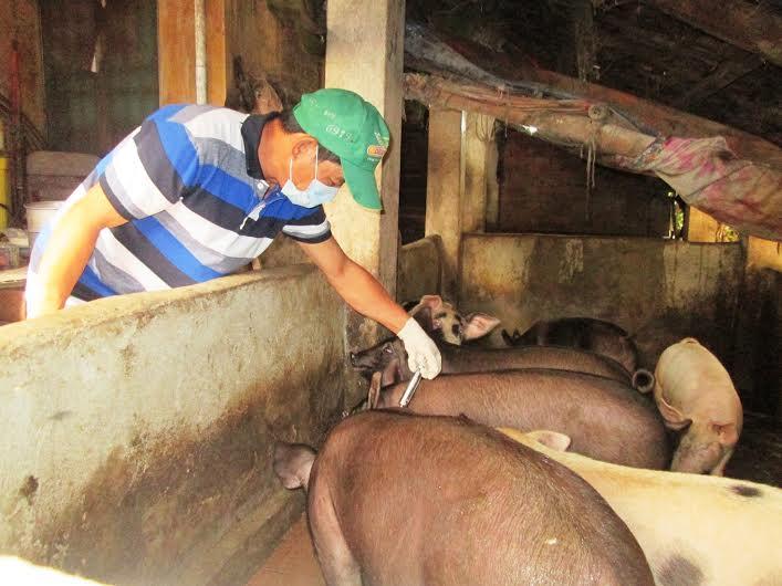 Tại nhiều nơi, tỷ lệ đàn gia súc được tiêm phòng vắc xin đợt 1 năm 2016 đạt rất thấp. Ảnh: N.P