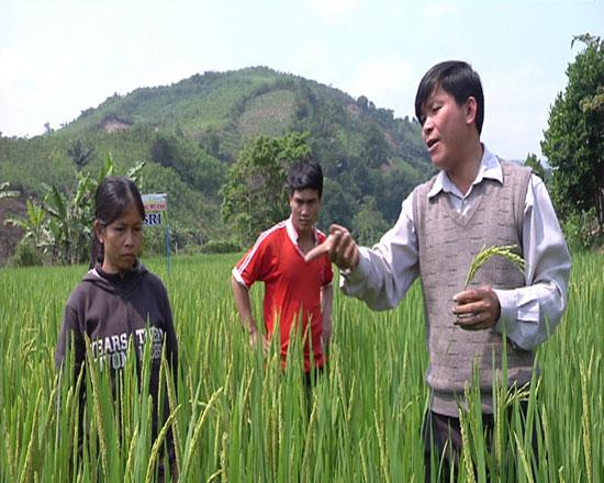 Cán bộ kỹ thuật phụ trách dự án hướng dẫn bà con kỹ thuật trồng, chăm sóc lúa nước. Ảnh: T.B
